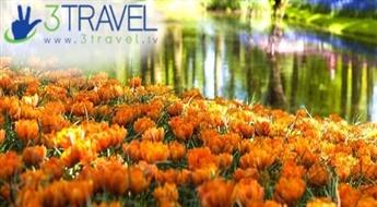 Autobusu ceļojums uz Nīderlandi - Amsterdama - Holande - Keukenhofas ziedu dārzs