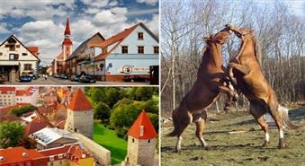 Pārsteidzošā Igaunija! Neaizmirstama ekskursija uz Pērnavu, Tallinu un Tori zirgaudzētavu ar 50% atlaidi!