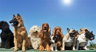 2 individuālas suņa apmācības nodarbības + konsultācija -50%