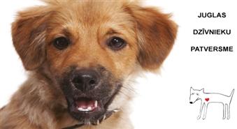 Palīdzi dzīvniekiem, kuri palikuši bez savām mājām. Ziedo Ls 1 Juglas Dzīvnieku patversmei!