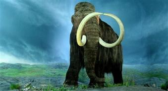 Pastaiga ar mamutu pa Gaujas Nacionālo Parku ar atlaidi 65%
