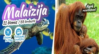 Bruņurupuču sala, orangutānu parks, Kinabatang upe un vēl daudz kas cits Malaizijā! Kuala Lumpura + Sandakan + Kota Kinabalu! 11 dienas pasakā! Lieliska izvēle neaizmirstamām brīvdienām!