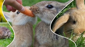 Pastaiga Trušu dārzā ar trušiem un citiem dzīvniekiem, kā arī izklaides uz batuta kompānijai ar 46% atlaidi!