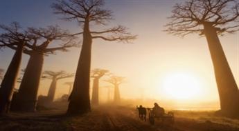 Madagaskara - Lemuru un baobabu sala