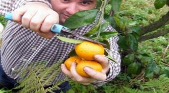 Gruzija - Piedzīvojumi ar mandarīniem saulainajā Gruzijā