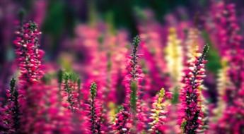 Lietuva-Ziedu festivāls Pakrojas muižā