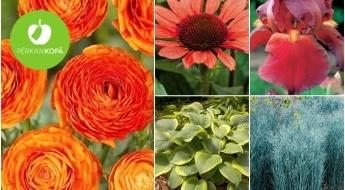 Ienes pavasari savā dārzā! Magoņu, kāršrožu, astilbju, hostu u.c. ziedu stādi